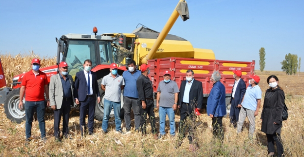 Alaca'da dane mısır hasadı başladı