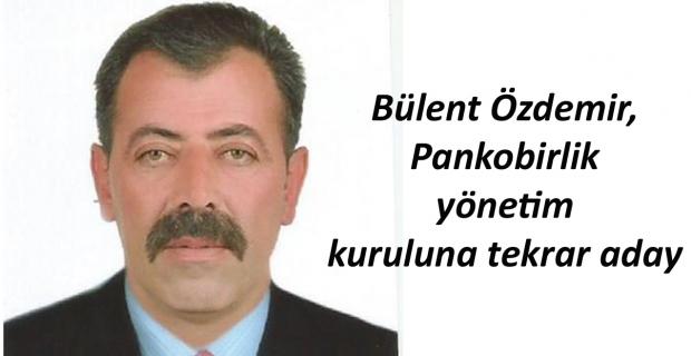Bülent Özdemir, Pankobirlik yönetim kuruluna tekrar aday