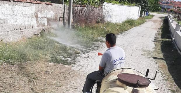 Alaca'da ilaçlama çalışmaları sürüyor