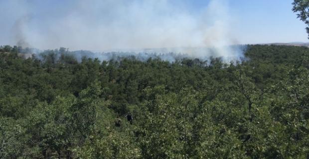 Alaca'da orman yangını