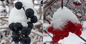 bAlaca#039;ya ilk kar düştü/b