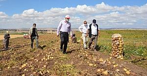 Patates hasadını incelediler