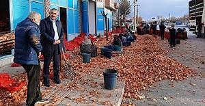 """""""Türkiye'nin en iyi soğanı Alaca'dan çıkıyor"""""""