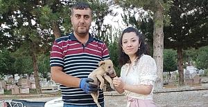 Başkan Şaltu yavru köpeğe sahip çıktı!