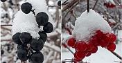 Alaca'ya ilk kar düştü